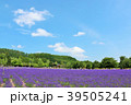 青空 夏 ラベンダー畑の写真 39505241