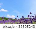 青空 夏 花畑の写真 39505243