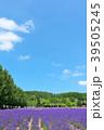 青空 夏 ラベンダー畑の写真 39505245