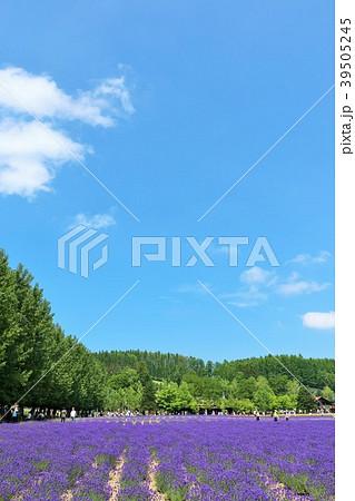 北海道 夏の青空とラベンダー畑 39505245