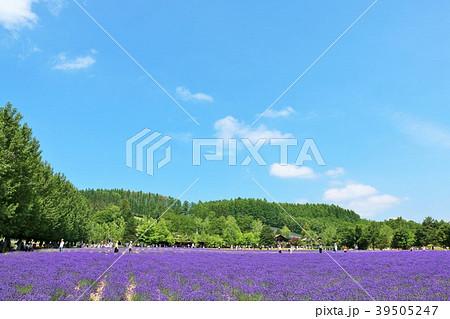 北海道 夏の青空とラベンダー畑 39505247