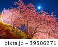 夜桜 河津桜 春の写真 39506271