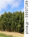 竹 風景 植物の写真 39507189