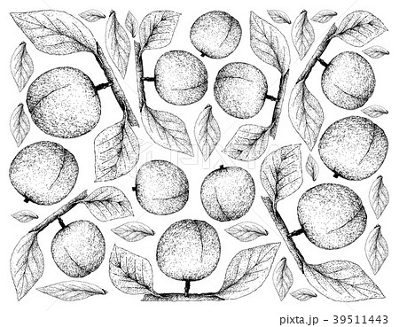 Hand Drawn Background of Fresh Apricote Fruits 39511443