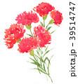 carnation18406pix7 39514747