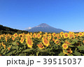 絶景風景(山梨県、花の都、秋) 39515037