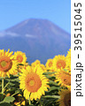 絶景風景(山梨県、花の都、秋) 39515045