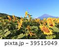 絶景風景(山梨県、花の都、秋) 39515049