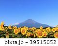 絶景風景(山梨県、花の都、秋) 39515052