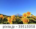 絶景風景(山梨県、花の都、秋) 39515058