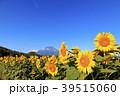 絶景風景(山梨県、花の都、秋) 39515060