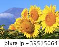 絶景風景(山梨県、花の都、秋) 39515064