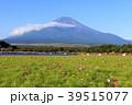 絶景風景(山梨県、花の都、秋) 39515077