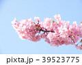 桜 河津桜 花の写真 39523775