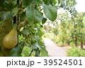 梨ガーデン 39524501