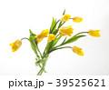チューリップ 花 植物の写真 39525621