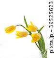 チューリップ 花 植物の写真 39525623