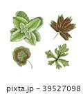 組み合わせ 葉 水彩画のイラスト 39527098