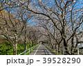 夜須 桜 ソメイヨシノの写真 39528290