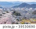桜 春 福島市の写真 39530690