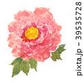 花 牡丹 ピンクのイラスト 39535728