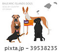 Dogs by country of origin. Balearic islands dogs 39538235