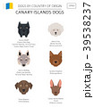Dogs by country of origin. Canarian dog breeds 39538237
