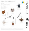 Dogs by country of origin. Canarian dog breeds 39538240