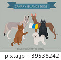Dogs by country of origin. Canarian dog breeds 39538242