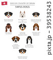 Dogs by country of origin. Swiss dog breeds 39538243