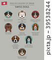Dogs by country of origin. Swiss dog breeds 39538244