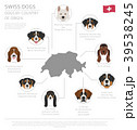 Dogs by country of origin. Swiss dog breeds. 39538245