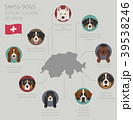 Dogs by country of origin. Swiss dog breeds 39538246