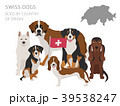 Dogs by country of origin. Swiss dog breeds 39538247