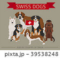 Dogs by country of origin. Swiss dog breeds 39538248