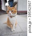 猫 39542907