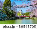 姫路城 桜 春の写真 39548705