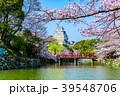 姫路城 桜 青空 39548706