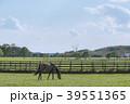 牧場 競走馬 サラブレッド銀座の写真 39551365