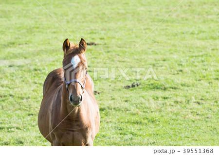 競走馬の育成牧場 / 北海道 日高町のサラブレッド銀座 39551368