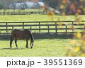 牧場 競走馬 サラブレッド銀座の写真 39551369