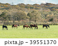 牧場 競走馬 サラブレッド銀座の写真 39551370