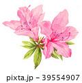 azalea18408pix7 39554907