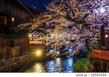 《京都府》祇園白川・夜桜 39564269