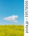 春イメージ 菜の花と青空と雲 39578500