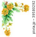 水彩で描いた菜の花の装飾フレーム 39580292
