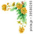 水彩で描いた菜の花の装飾フレーム 39580293