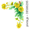水彩で描いた菜の花の装飾フレーム 39580295
