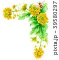 水彩で描いた菜の花の装飾フレーム 39580297