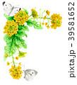 菜の花 花 フレームのイラスト 39581652
